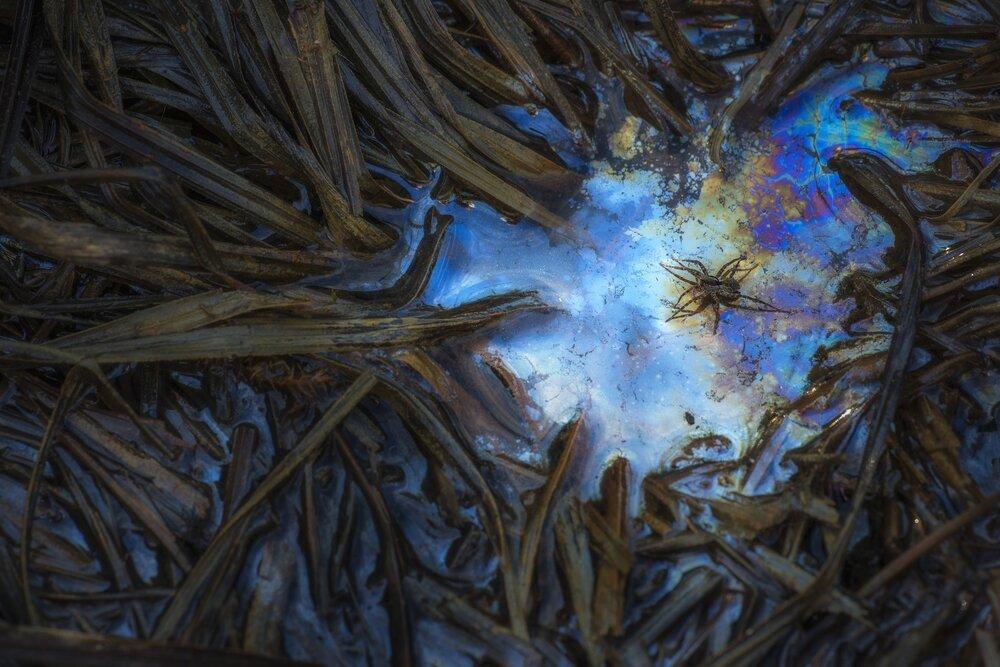 Csaba Daroczi  | Spider in the Swamp